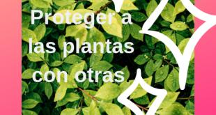 Plantas que se encargar de proteger a otras.